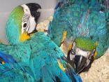 amor por las aves