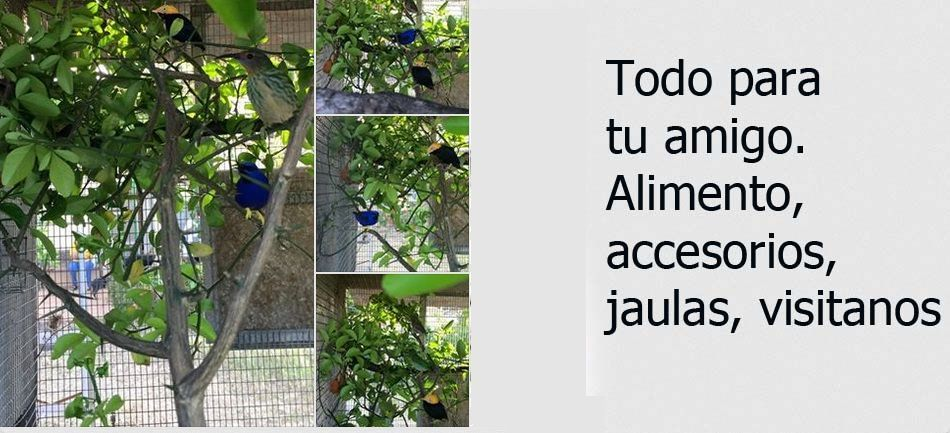 Yacos y otras aves disponibles