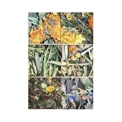Los 6 hierbas de Amora