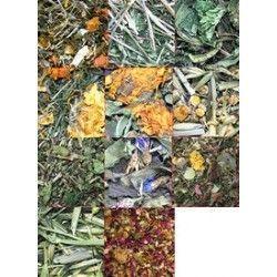 Los 11 hierbas de Amora